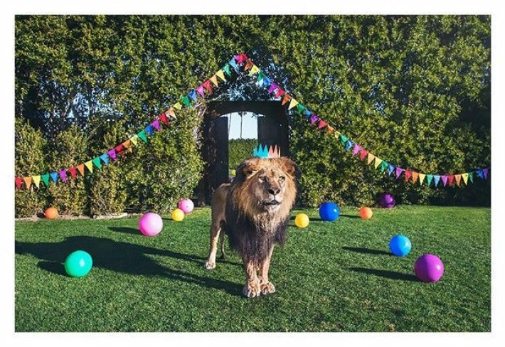gray-malin-is-a-party-animal-in-his-latest-project-1817115-1466796547-700x0c